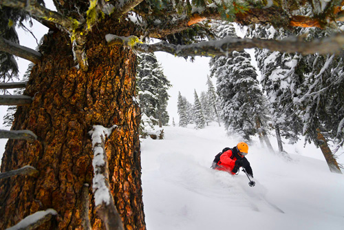 The tree skiing is very good here, especially when the pow has recently fallen.