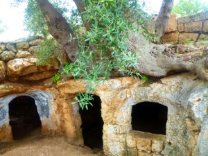 Hobbit cave houses with olive trees growing on the roof. Where else but Puglia can you see this crazy stuff!