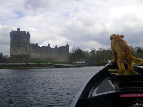 The dog knows the way! At the end of our awesome Dunloe Gap/ Killarney Lakes day, we were greeted by Ross Castle. What a grand day!